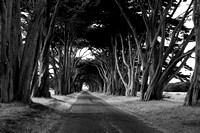 maintenance road, Pt Reyes