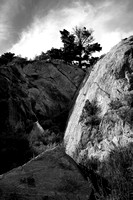 pine on cliff, Pt Lobos