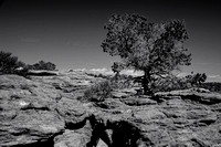 tree #3, Canyon de Chelly