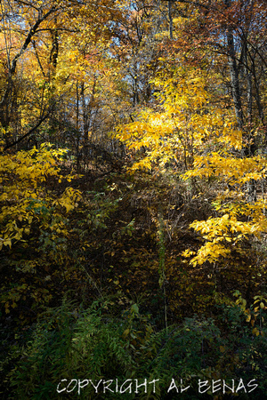 yellow leaves, Blue Ridge Parkway