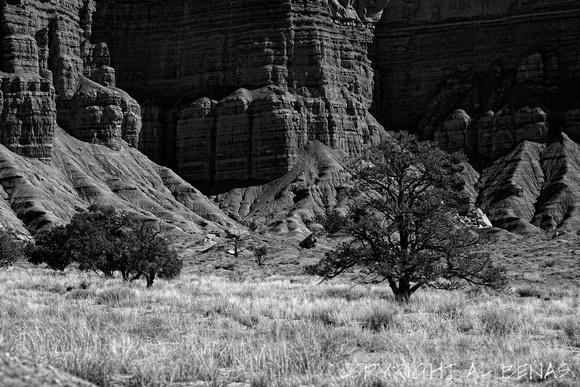 small grove, Capital Reef