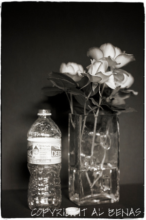 Roses with Bottle